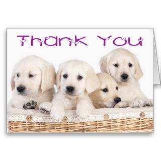 Thank You Labrador Retriever Puppy Dogs Card