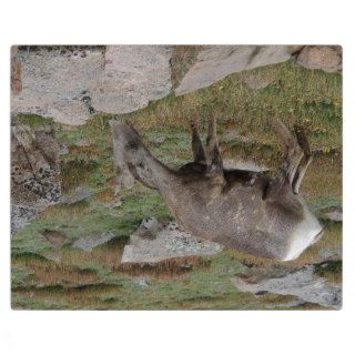 Rocky Mountain Big Horn Sheep Ewe Photo Plaques