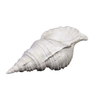 Urban Trends Collection White Resin Seashell Urban Trends Collection Accent Pieces