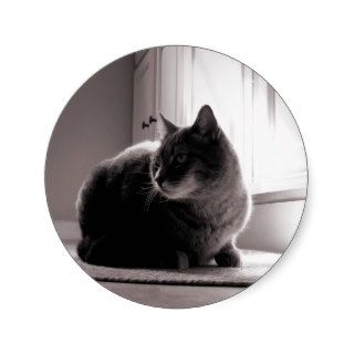 Fat Tabby Cat Round Stickers