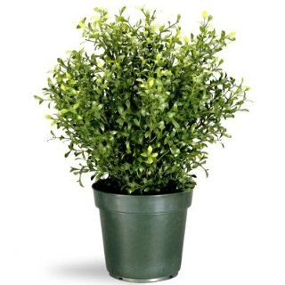 "Shop 24"" Potted Artificial Realistic Argentea Jade Plant at the  Home D�cor Store. Find the latest styles with the lowest prices from National Tree Company"
