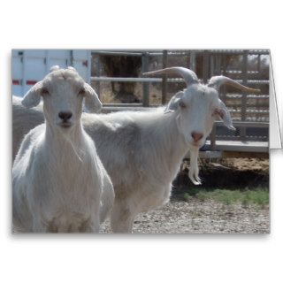 Cute Capricorn Happy Birthday Goats Card