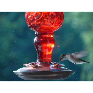 Perky Pet 8119 2 Red Antique Bottle Hummingbird Feeder  Wild Bird Feeders  Patio, Lawn & Garden