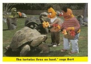 "The tortoise lives on land,"" says Bert trading card (Sesame Street) 1992 Idolmaker #91 Entertainment Collectibles"