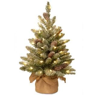National Tree Company 2 ft. Snowy Concolor Fir Tree with Battery